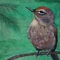 Little Warbler by Leslie Allen
