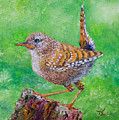 Little Wren by Dee Carpenter