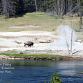 Live Dream Own Yellowstone Park Bison Text by Thomas Woolworth