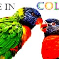 Live In Color by Lisa Renee Ludlum
