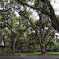 Live Oak And Spanis Moss Landscape by Kathy Clark