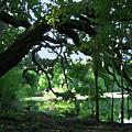 Live Oak Hidden Pond by Marnie Hutcheson