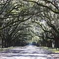 Live Oak Lane In Savannah by Carol Groenen