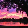 Live Oak Sunset by Rick Locke