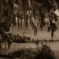 Live Oak Tree Spanigh Moss Sepia Silhouette by Dale Powell