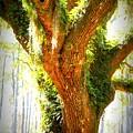 Live Oak With Cypress Beyond by Carol Groenen