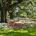 Live Oaks At Brookgreen Gardens by Bill Barber