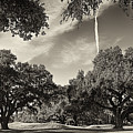 Live Oaks by Phill Doherty