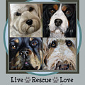 Live Rescue Love by Mary Sparrow
