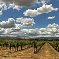 Livermore Vineyard by Douglas Shier