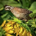 Living On Sunflowers by Steve Marler