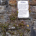 Living Wall At Donegal Castle Ireland by Teresa Mucha
