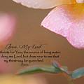 Living Waters by Belinda Rose