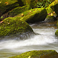 Living Waters by Neil Doren