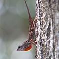 Lizard 2 by Jim Clark
