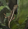 Lizard 2 by Michael Peychich