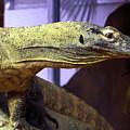 Lizard  by Charles Long