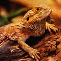 Lizard - Id 16217-202744-5164 by S Lurk