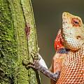 Lizard In Maldive by Dan Balica