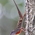Lizard by Jim Clark