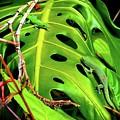 Lizard Licks  by Jamie Clark