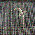 Lizard On A Screen Porch by Robert Butler