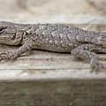 Lizard On Deck by Diane Friend