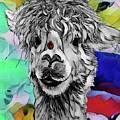 Llama And Lady In Splash by Lisa Pfeiffer