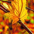 Leaving Autumn by Serhii Simonov