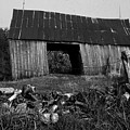 Lloyd-shanks-barn-4 by Curtis J Neeley Jr