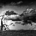 Loan Tree by Laura Macky