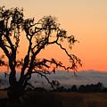 Loan Tree Overlooking Fog by Jill Reger