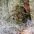 Lobo's Web by Steve Harrington