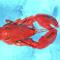 Lobster On Turquoise by Nikolyn McDonald