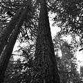 Lofty Tree by Noah Cole