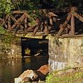Log Bridge by Darlene Bell