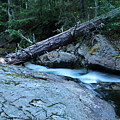 Log Over Deep Creek by Jeff Swan
