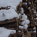 Log Row by Margaret Dahms