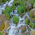 Logan Canyon Cascade by Dennis Hammer
