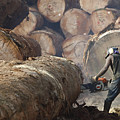 Logger Cutting Tree Trunk, Cameroon by Cyril Ruoso
