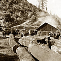 Logging With Oxen At A Saw Mill Sonoma County California Circa 1900 by California Views Mr Pat Hathaway Archives