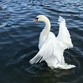 London Swan by Tania Cardenas