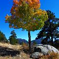 Lone Aspen by Shane Bechler