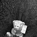 Lone Bear by Jez C Self