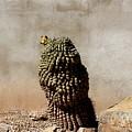 Lone Cactus In Sepia Tone by Colleen Cornelius