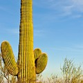 Lone Cactus by Tom Dowd