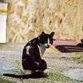 Lone Cat by Alessandro Della Pietra