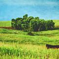 Lone Cow On The Prairie by Anna Louise