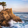 Lone Cypress by Anthony Michael Bonafede