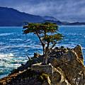 Lone Cypress by David Davis